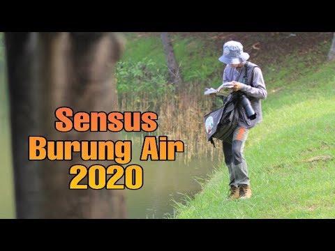 awc-2020:-4-jenis-burung-air-ditemukan-di-ancol