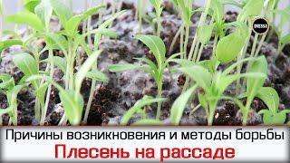 видео Липкие капли на листьях орхидеи