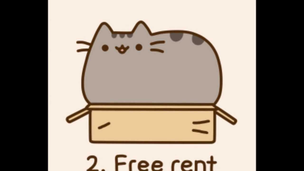 Reasons You Should Get Cat