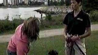 Bark Busters Home Dog Training Vancouver Global