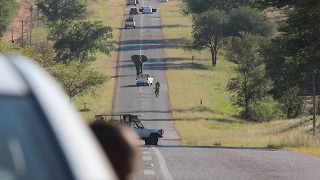 Giant Elephant Blocks Busy Road