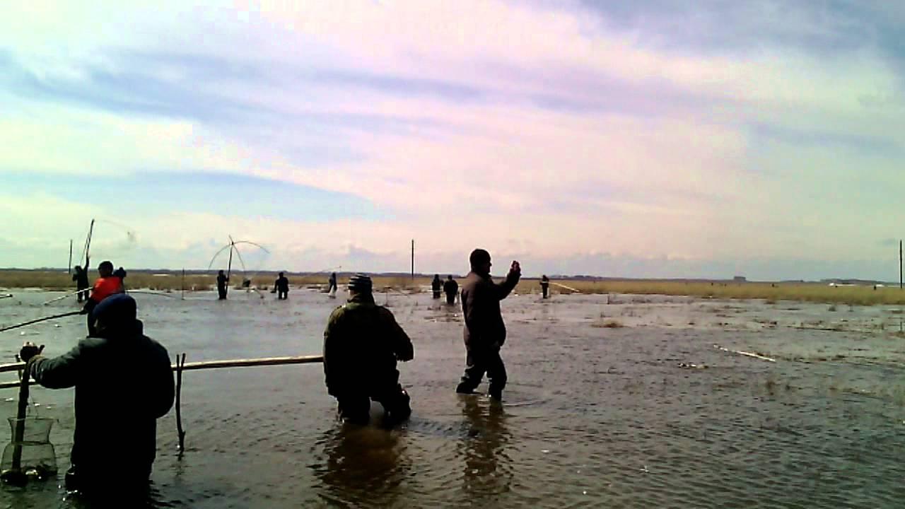 онлайн про рыбалку