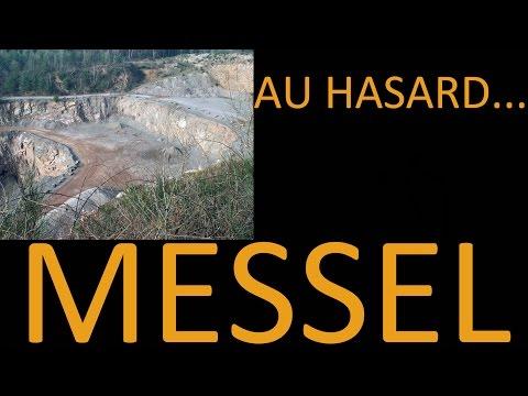un site fossilifère au hasard#17 - Messel