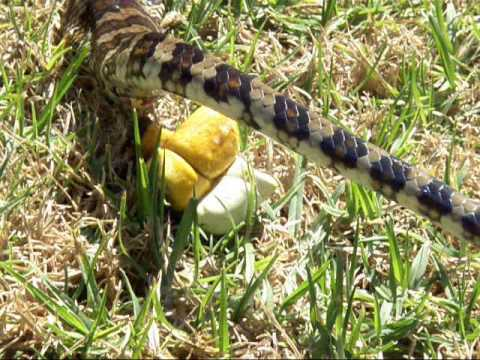 How Do Snakes Poop? And The Secrets Behind It – Cobras org