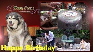 Celebrating Sheru Birthday | Dog Birthday | Alaskan Malamute | German Shepherd