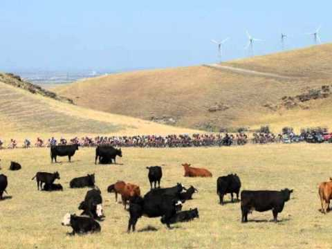 Killer GMO Grass Kills Cattle.