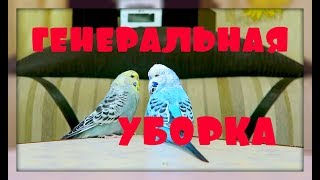 ГЕНЕРАЛЬНАЯ УБОРКА КЛЕТКИ ПОПУГАЯ!!!