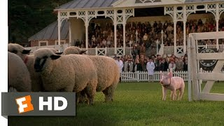 Babe (8/9) Movie CLIP - The Sheep Pig (1995) HD