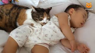 Cats Protect Babies - Cats Love Babies - Most Funny Cat Movies 2017