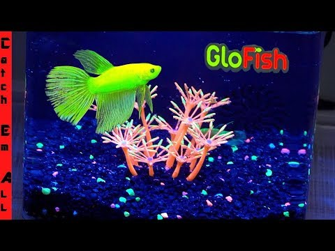 BETTA GLO-FISH AQUARIUM! **Full Diy Review And TANK BUILD**