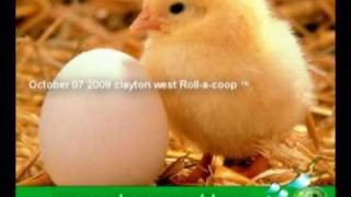 Keeping Chickens In Your Backyard, Eggs For Free, ( Plans $5 )