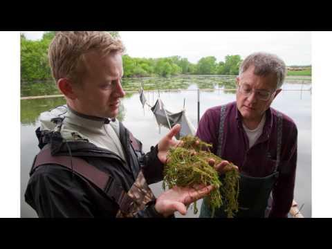 Aquatic Invasive Species | April 2017