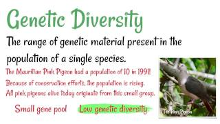 gene pool diversity - 320×180
