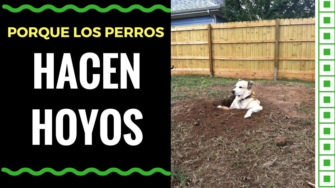 Porque los perros escarban y hacen hoyos en el jard n - Jardin para perros ...