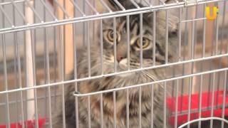 Глазами животных, выпуск 177 (Международная выставка кошек, часть 1)