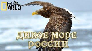 Дикое море России - Сезон изобилия. Дикая природа России. #Документальный National Geographic 12+