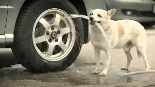 FunnyAnimals #17 Wonderful dog