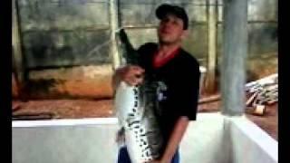 Video Pesca no rio das almas cachara mais de 20 kl.mp4 download MP3, 3GP, MP4, WEBM, AVI, FLV Juli 2018