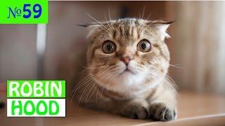 ПРИКОЛЫ 2017 с животными. Смешные Коты, Собаки, Попугаи // Funny Dogs Cats Compilation. Март №59