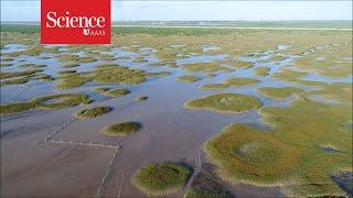 How fairy circles form in Shanghai's salt marshes