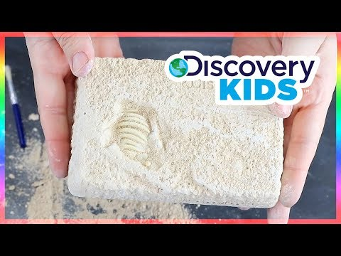 Discovery Kids Dinosaur Excavation Kit – Triceratops