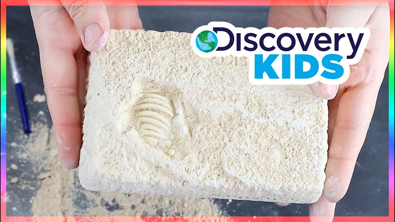 5e5db7467 Discovery Kids Dinosaur Excavation Kit – Triceratops - YouTube