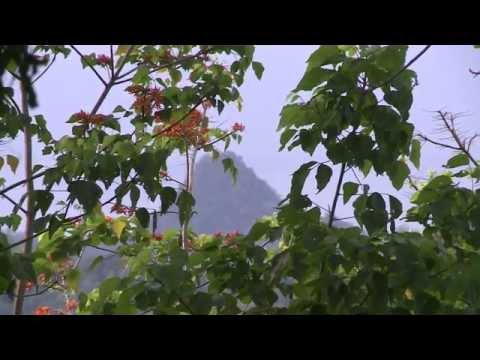 São Tomé: Saved by Chocolate