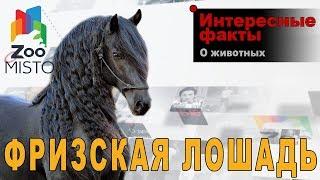 Фризская лошадь - Интересные факты о породе |Лошадь породы фризская лошадь