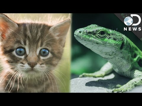 Warm-Blooded vs. Cold-Blooded: What's The Difference?