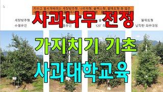 사과나무 가지치기 전정 기초 사과대학교육