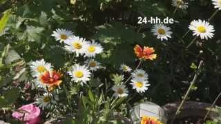 Живые Цветы и Красивая Итальянская Музыка для Любимой. Женщина Любимая Самая Красивая