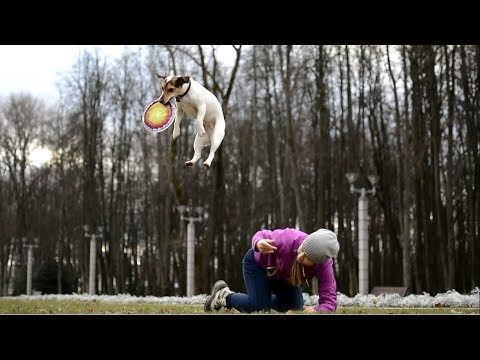 Amazing Dog Tricks → Jack Russell Terrier GRETA