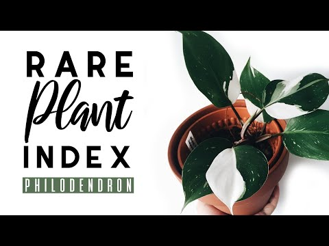 Rare Plant Index #1 | Philodendron | Uncommon to Extremely Rare Plants!