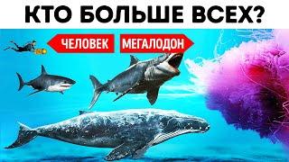 Самые большие, быстрые и холодные существа и создания из всех когда-либо существовавших