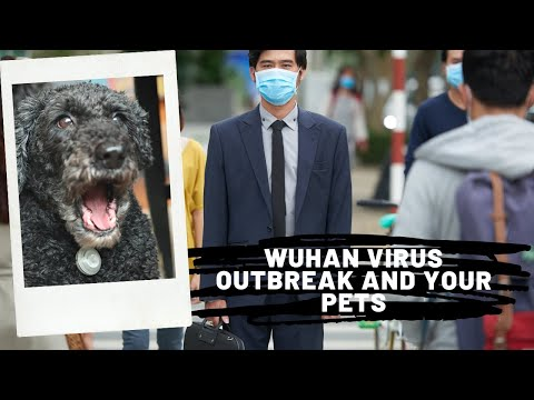 Flu Outbreak And Your Dogs And Cats