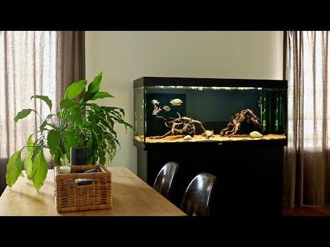 New Tank Setup For My Geophagus Tapajos Red Head Fish | Blackwater Aquarium