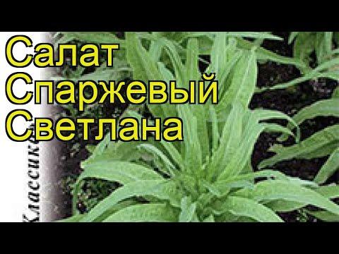 Салат спаржевый Светлана. Краткий обзор, описание характеристик, где купить семена Lactuca Sativa