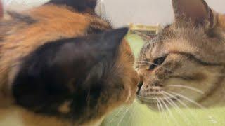 いつも険悪な猫達ががいい感じだったので見守った結果…