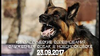 Кинологические соревнования служебных собак в НОВОМОСКОВСКЕ | 23.06.2017