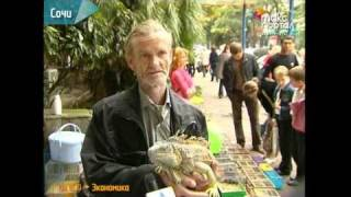 Появится ли в Сочи настоящий птичий рынок?