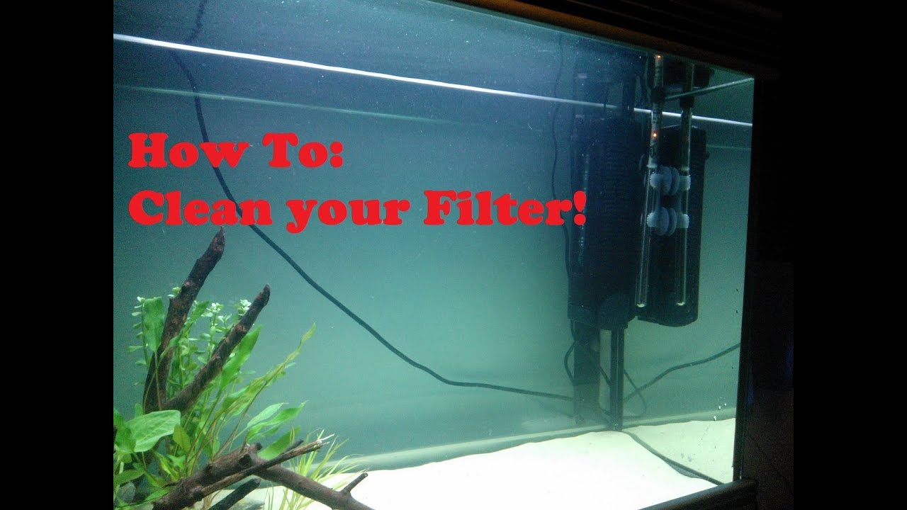 How to easily clean an aquarium filter youtube for How to clean fish tank filter
