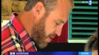 Elevage de Highland Cattle :reportage France 3 Auvergne