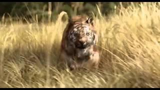 Книга джунглей   Смотреть Трейлер HD 2016