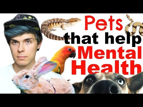 Pets That Can Help with Mental Health!
