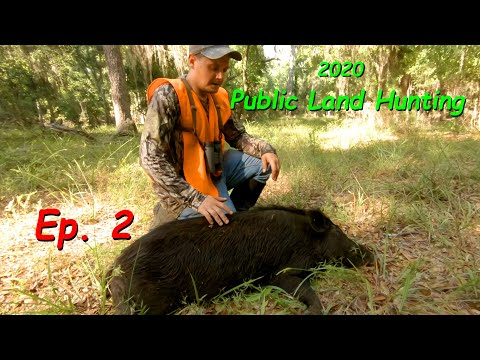 Public Land Hunting | Scouting Turns Into Hunting