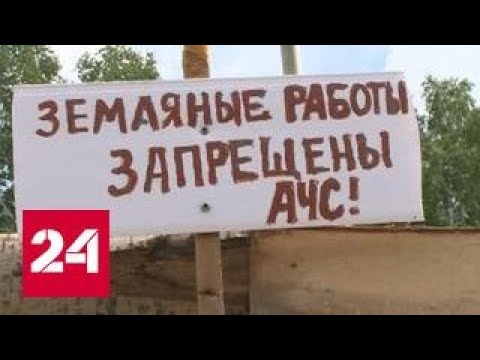 В Омской области массово режут свиней из-за африканской чумы