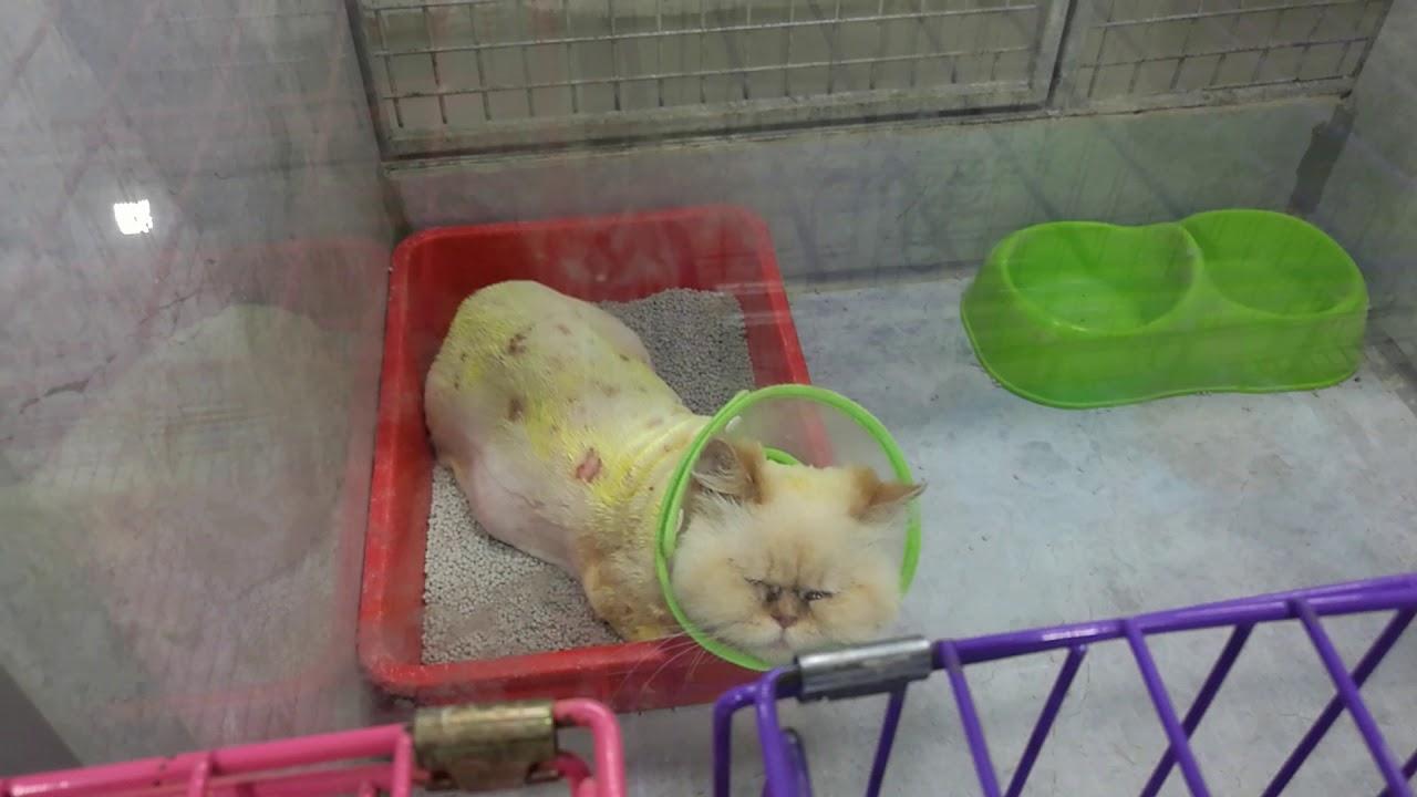 Cute Cat القط المدلل Youtube