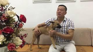 Hướng dẫn cách chăm sóc và nuôi dưỡng chó con 2 tháng tuổi tách mẹ về nhà mới.