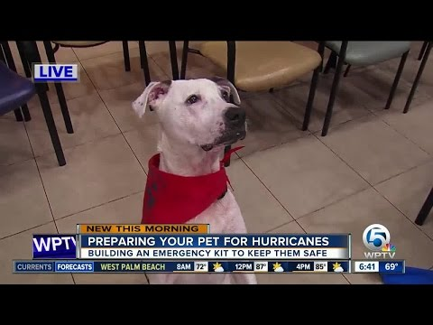 Steps to prepare your pet for a hurricane