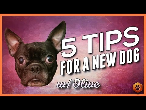 Bringing Home a New Dog - 5 Tips from Olives first week